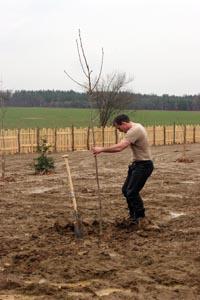 200 bäume sind zu pflanzen gespendet von thomas kellner von urholz